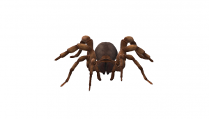 Animated Spider choose a professional pest control company