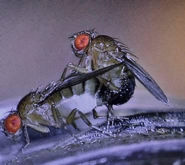 Blog-My Working Week in Pest Control