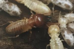 termites all together