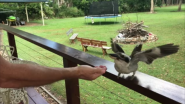 Brisbane Pest Control Feeding The Locals