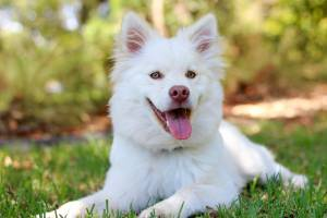 Little white fluffy dog