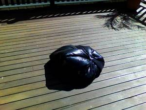 bedbugs treatment process using black plastic bag and heat