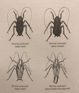 Some different cockroach species