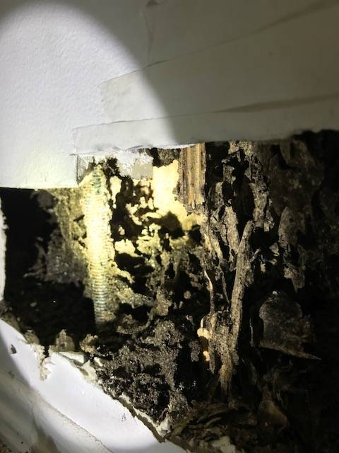 subterranean termites damage to a house wall