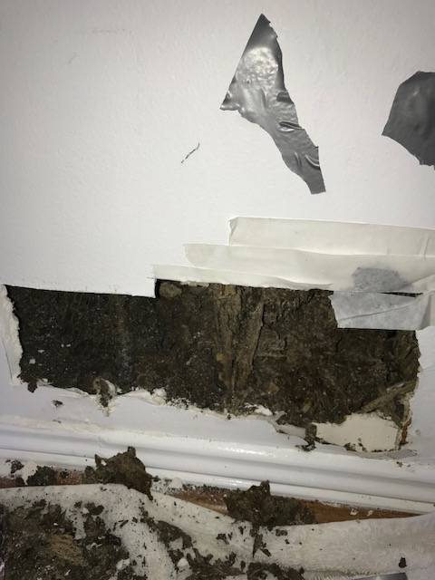 Termite damage to an internal wall of a house.