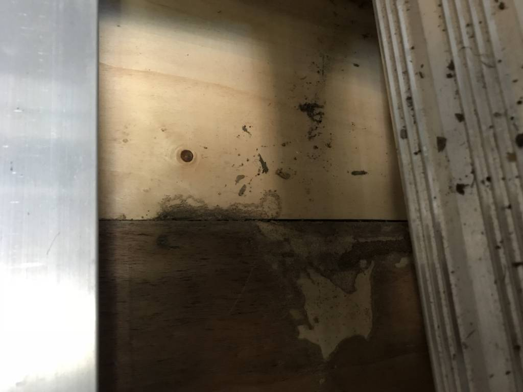 Termite damage to garage wall