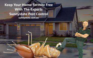 Found A Termite Nest Don't Destroy It!