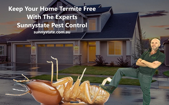 Moisture issues equal termites