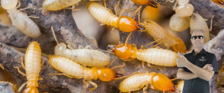 Has Your Home Got Termites