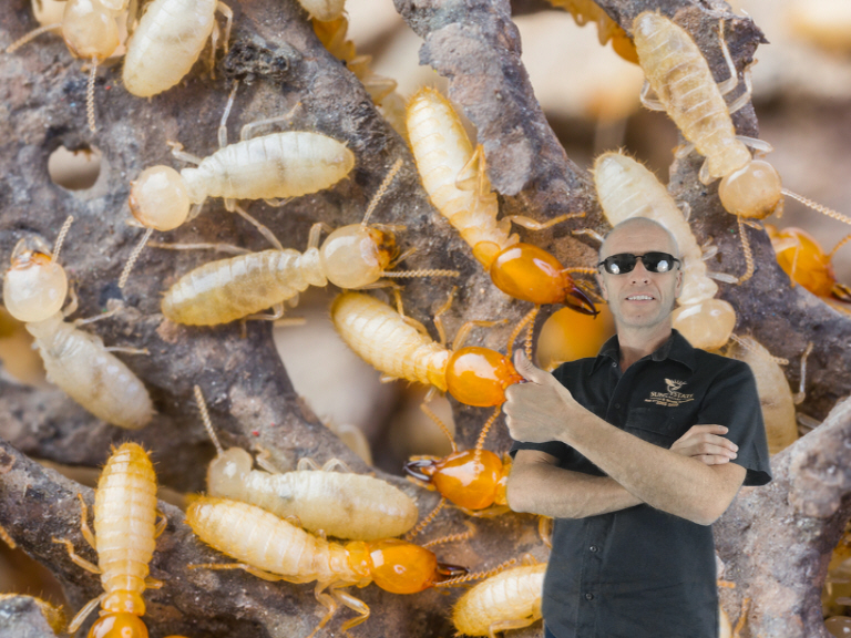Jason from Sunnystate Pest Control standing with lots of termites