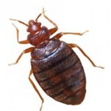 The Best Way To Treat Bed Bugs