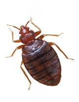 Heat will kill bed bugs
