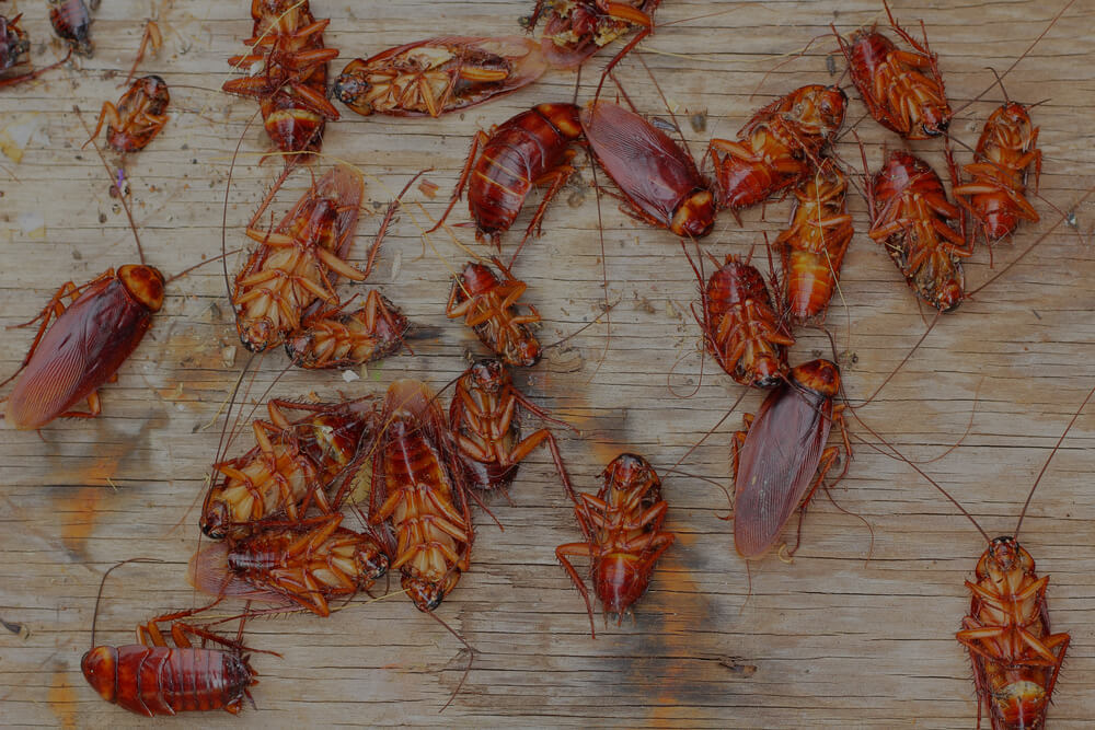 Keep Insects Out During The Colder Winter Months