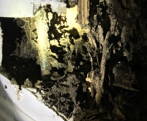 serious termite damage to a wall in a bathroom room