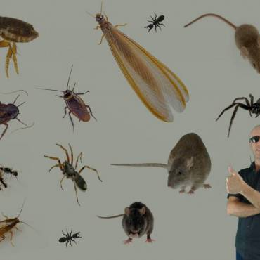 What Clients Need To Know Before Your Pest Treatment?