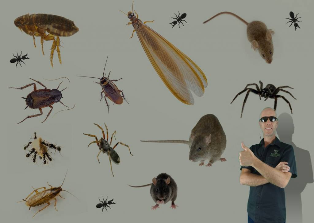 Jason the pest controller with lots of different pests found in Brisbane