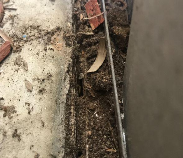 pest inspectors miss termite activity
