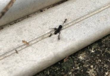 Natural Ant Killer Tips