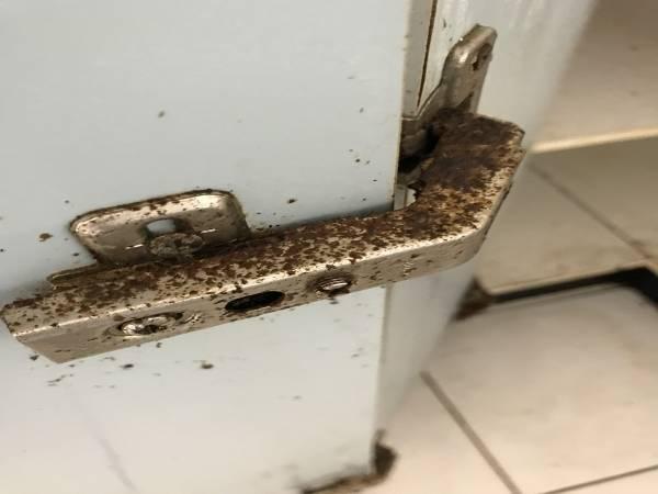 Kitchen cupboard door hinge destroyed by cockroaches.