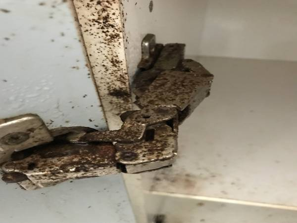 Kitchen cupboard door hinge with cockroach faeces all over it.