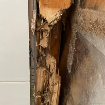 Termite damage customer experience